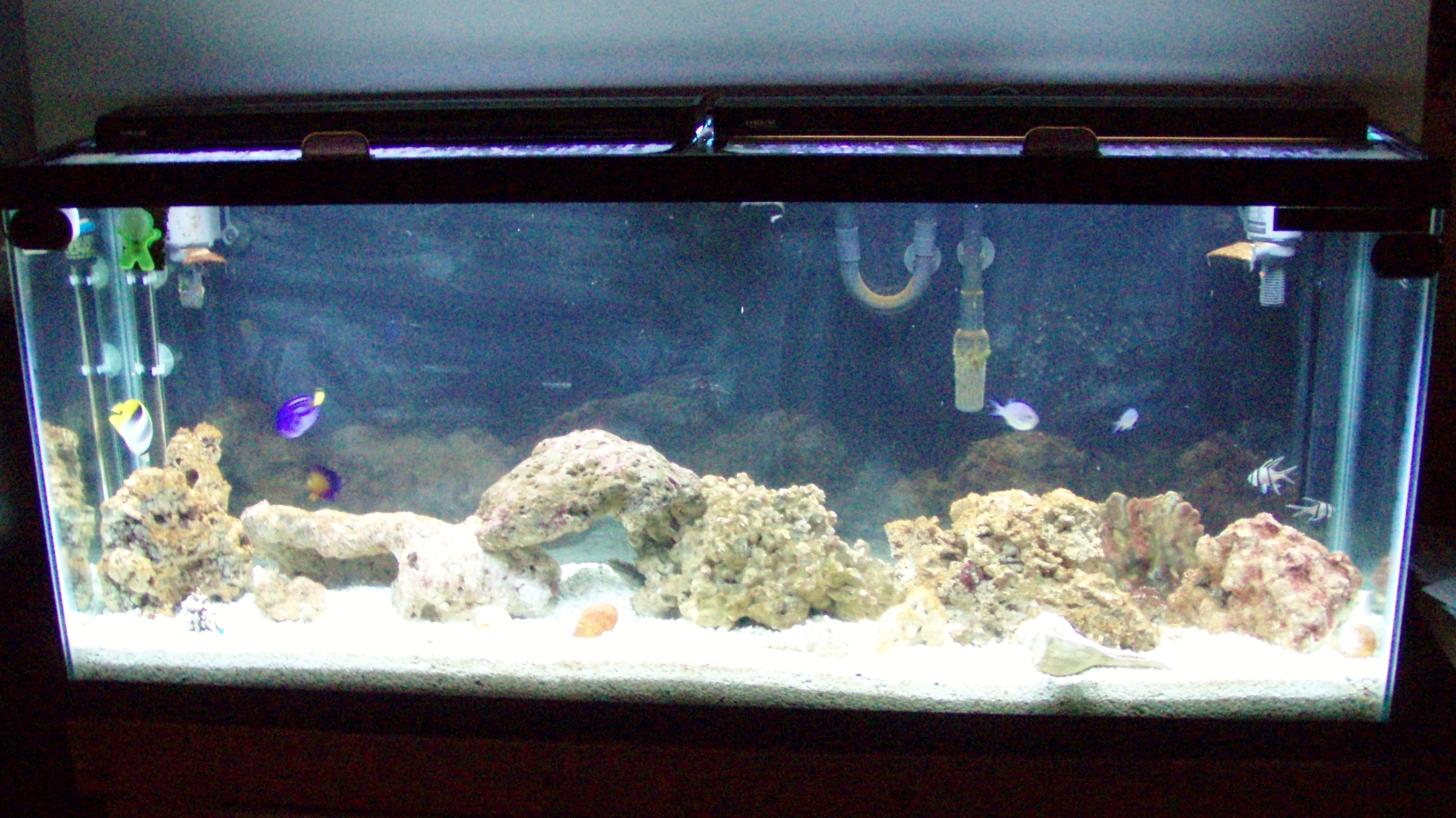 Saltwater fish aren 39 t we lucky for 55 gallon fish tank