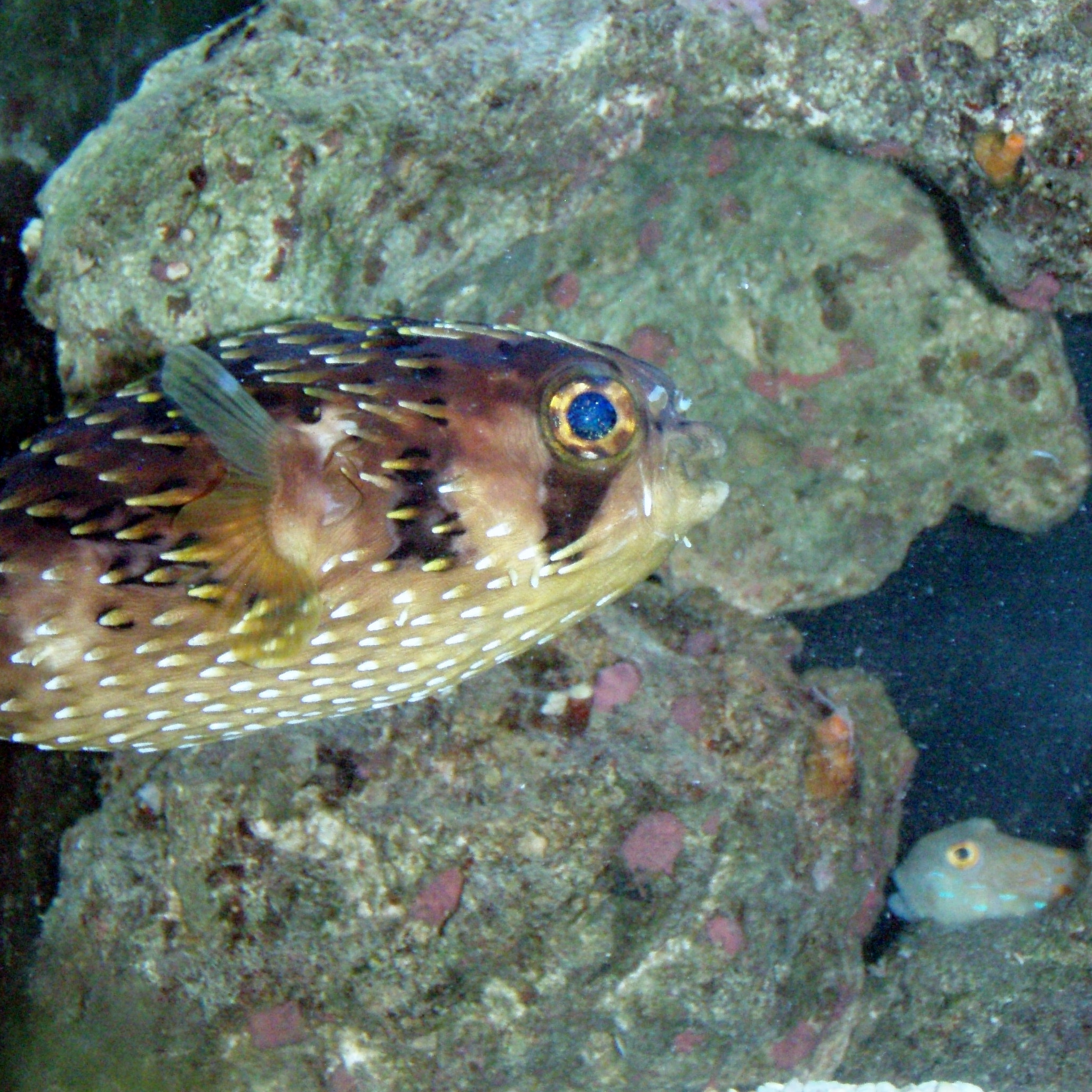 Saltwater fish aren 39 t we lucky for Saltwater goby fish